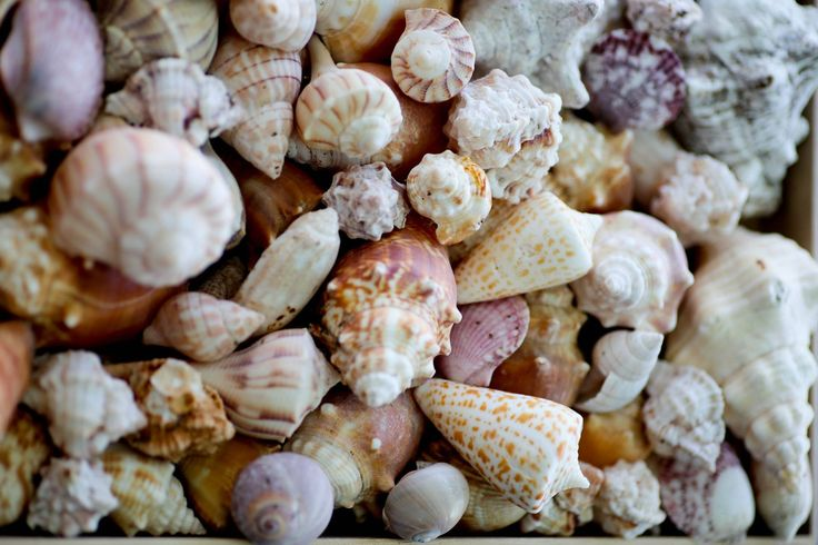 Do you love seashells as much as I do!?!?!