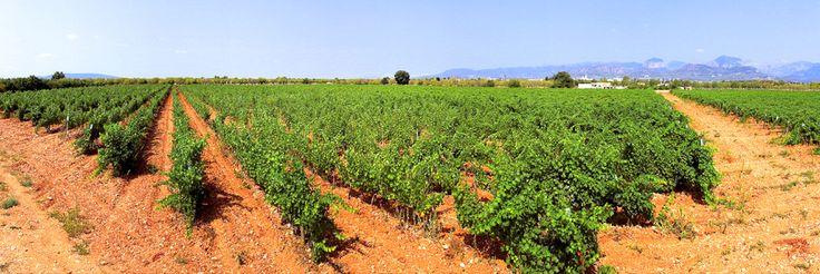 Bodegas José L. Ferrer - Vinos D.O. Binissalem, Mallorca