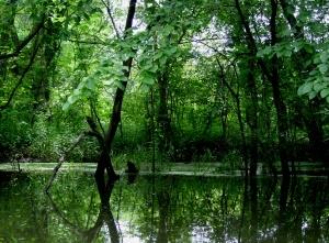 """Summer fieldwork in environmental science"" - Chichaqua Bottoms Greenbelt"