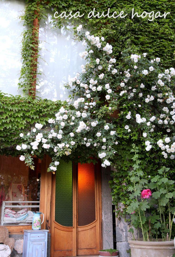Rosas trepadoras blancas y pastel                                                                                                                                                                                 Más