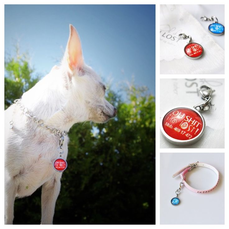 """""""Oh Shit, I'm lost"""", dog necklace or tag"""