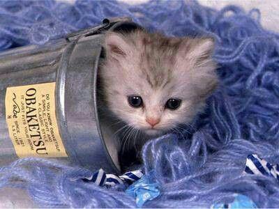 Koťatko ve kiblyku