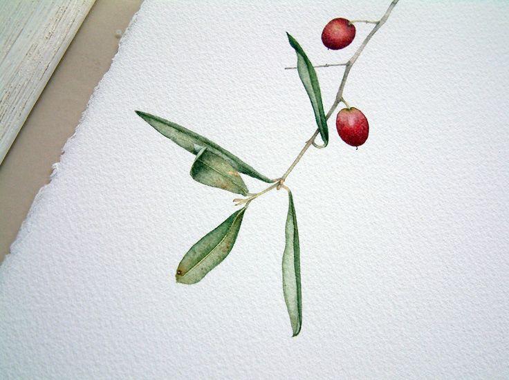 Acquerello Originale Ramo di Ulivo, Illustrazione Botanica ramo ulivo della Liguria realizzato su carta 100% cotone.Disegno Naturalistico. di ilsassolinoblu su Etsy