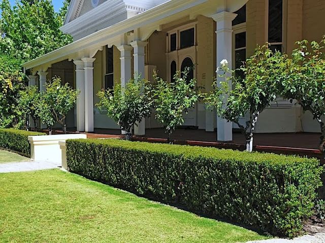 Semi formal small gardens australia google search for Formal front garden ideas