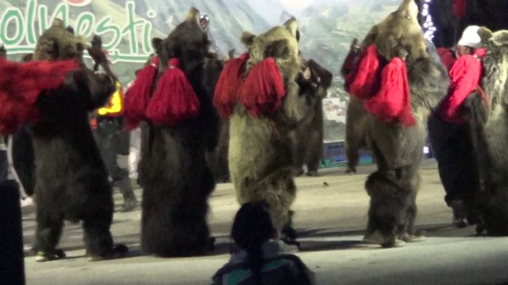 Urșii din Văsâiești