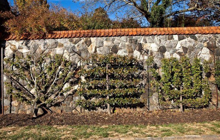 Palmette en éventail + Palmette horizontale Legendre + Palmette Verrier à six branches, contre le mur