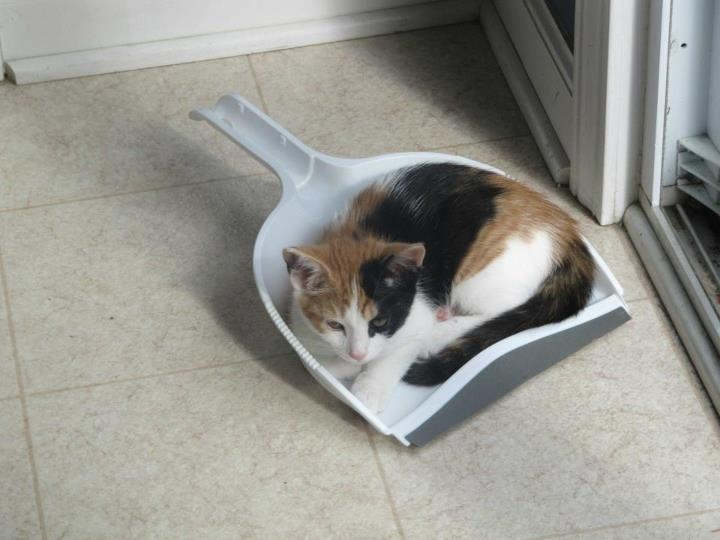 """The floor is clean enough. If it fit in it, I sit in it!""Cleaning Lazy People, 28 Helpful, Helpful Cleaning, Incredibles Lazy, Lazy Cleaning, Incr Lazy, Buzzfed Cleaning Tips, Cleaning House Tips, Calico Cat"
