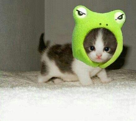 FrogCat