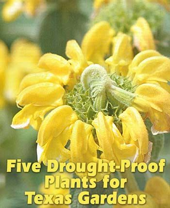 Five Drought-Proof Plants for Texas Gardens Source: http://www.texasgardener.com/pastissues/marapr06/drought.html