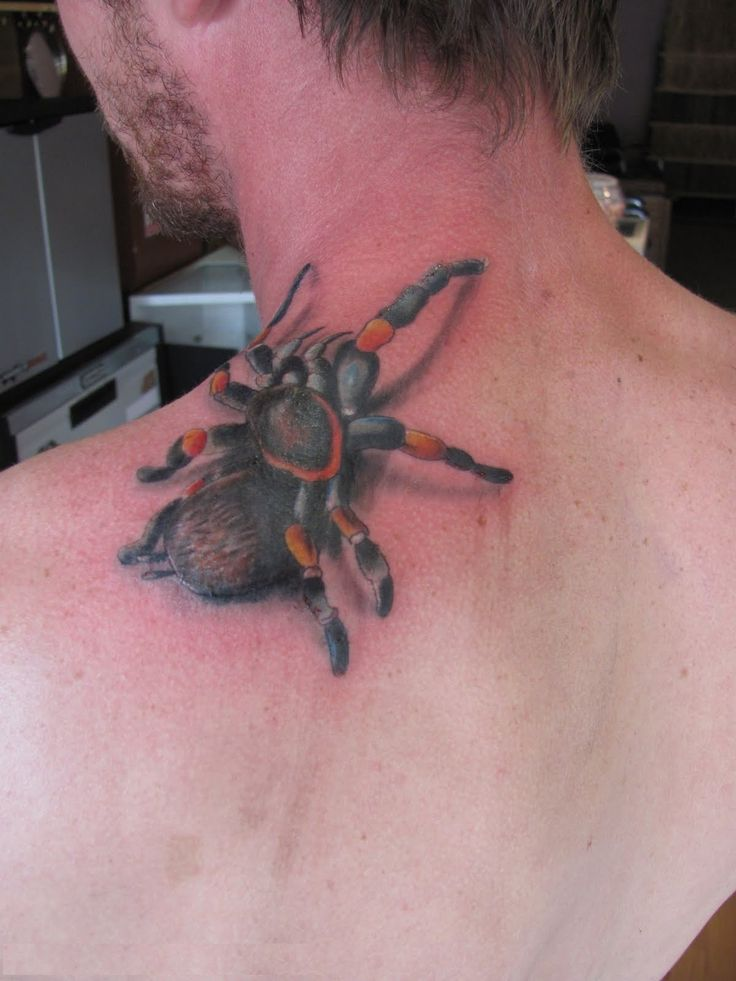 stunning 3d spider tattoos wallpaper
