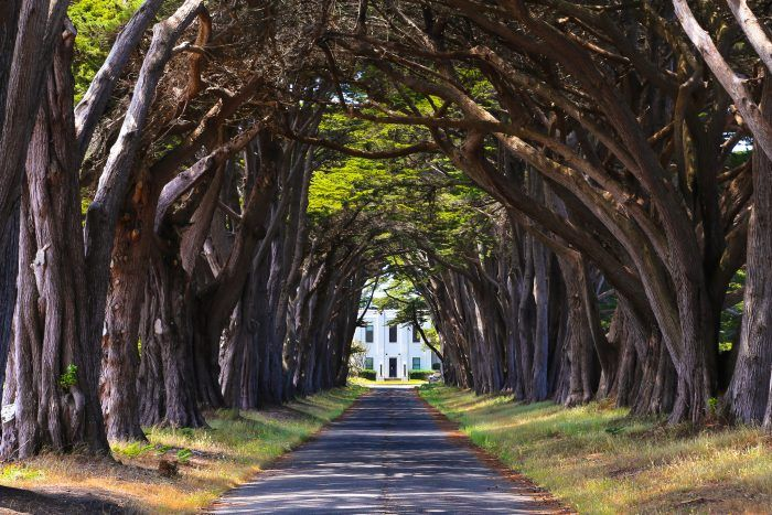 7. Point Reyes National Seashore: The Place With A Tunnel Of Trees Most People Don't Know About