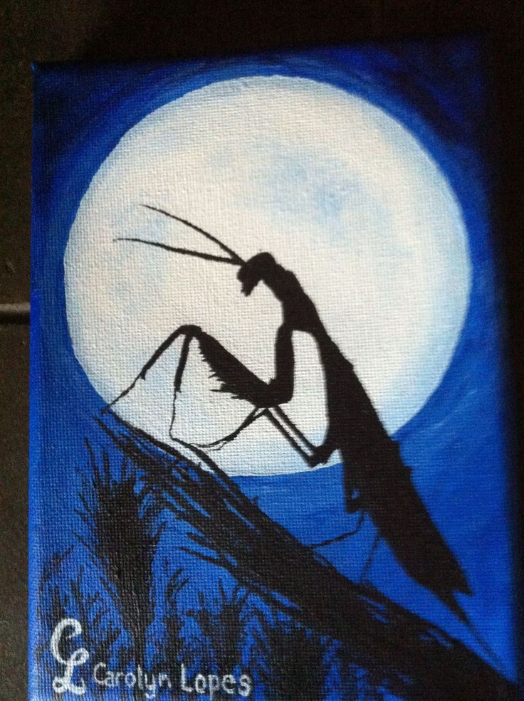 Mantis by moonlight by Carolyn Lopes