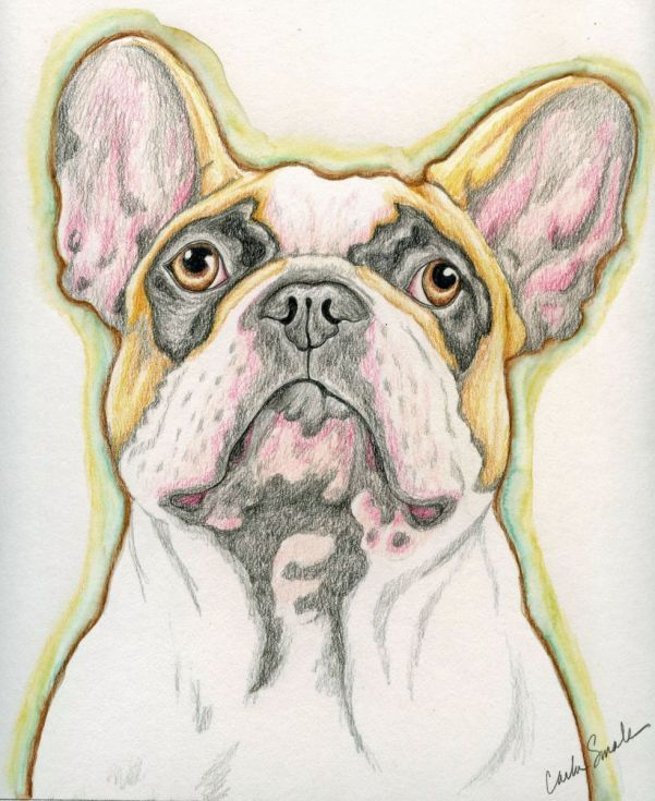 Buy French Bulldog Original Drawing 8 x 10 Inches-Carla Smale, Pencil drawing by carla smale on Artfinder. Discover thousands of other original paintings, prints, sculptures and photography from independent artists.