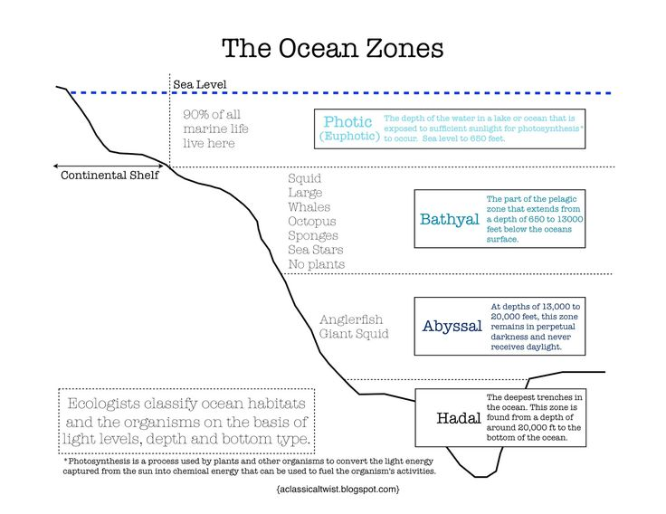 homeschooling with a classical twist ocean zones printable 4th grade science pinterest. Black Bedroom Furniture Sets. Home Design Ideas