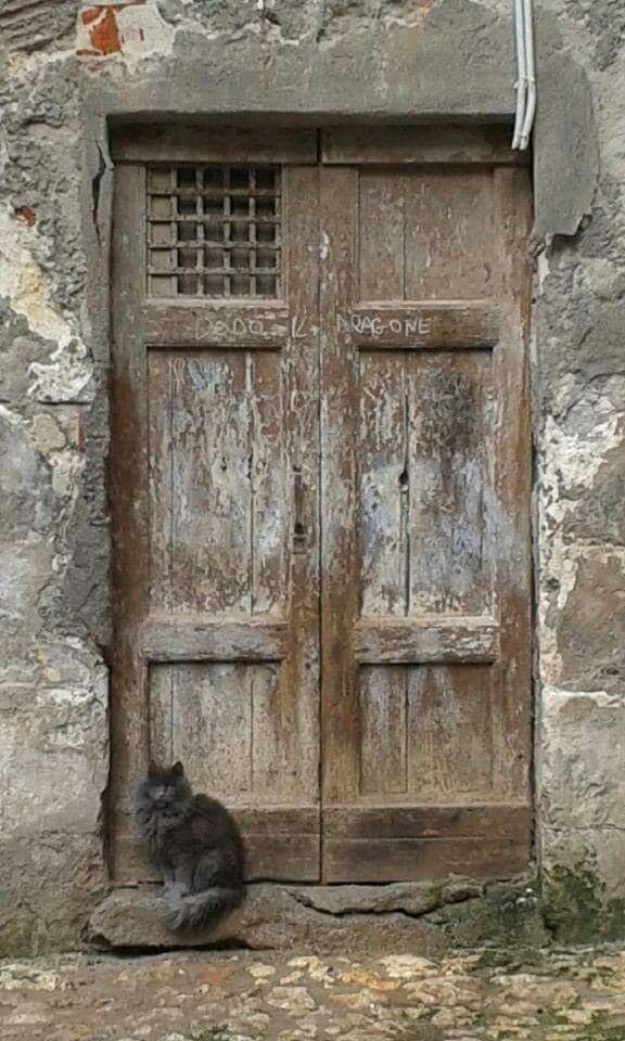 doorway with cat