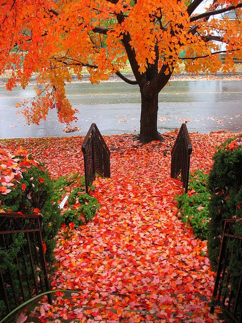 .Autumn Street, Fall Leaves, Autumn Leaves, Autumn Fall, Colors, Beautiful, Red Carpets, Favorite Seasons, Fall Autumn