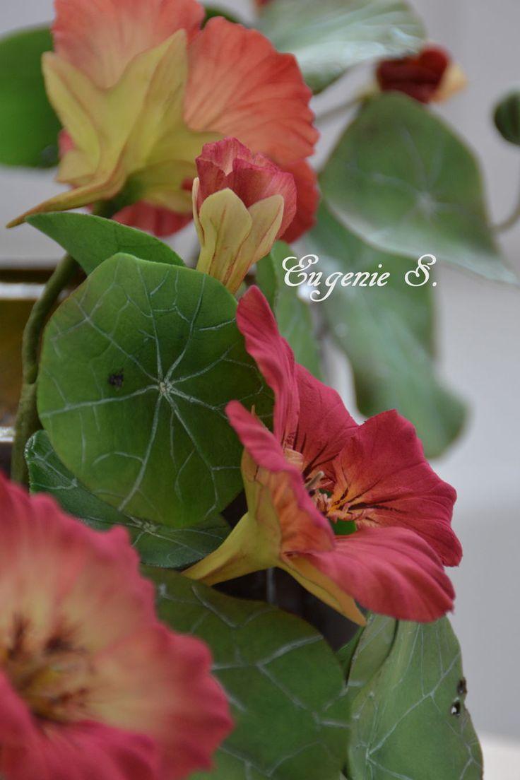 {Attractive Nasturtium Flowers by Eugenie S.}