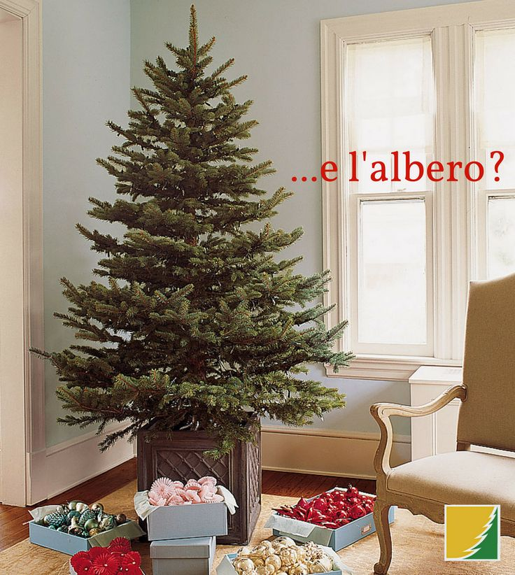 Fai con noi il tuo ALBERO DI NATALE! 🎄 Presso i nostri Vivai troverai piante di Abete e altre soluzioni per un Natale autentico e sostenibile! ✨ Prenotalo ora! 🎅