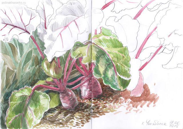 #sketchbook by Polina Khoronko: Скетчбук 2015 #watercolor #foodillustration #vegetable