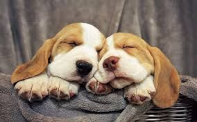 Risultati immagini per tipi di razze di cani