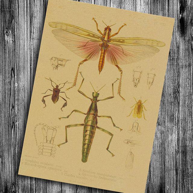 Vintage Insectes Affiche Libellule Cricket Sauterelle Peinture Kraft Papier rétro Mur Autocollant de Chambre Bar Pub Café chambre