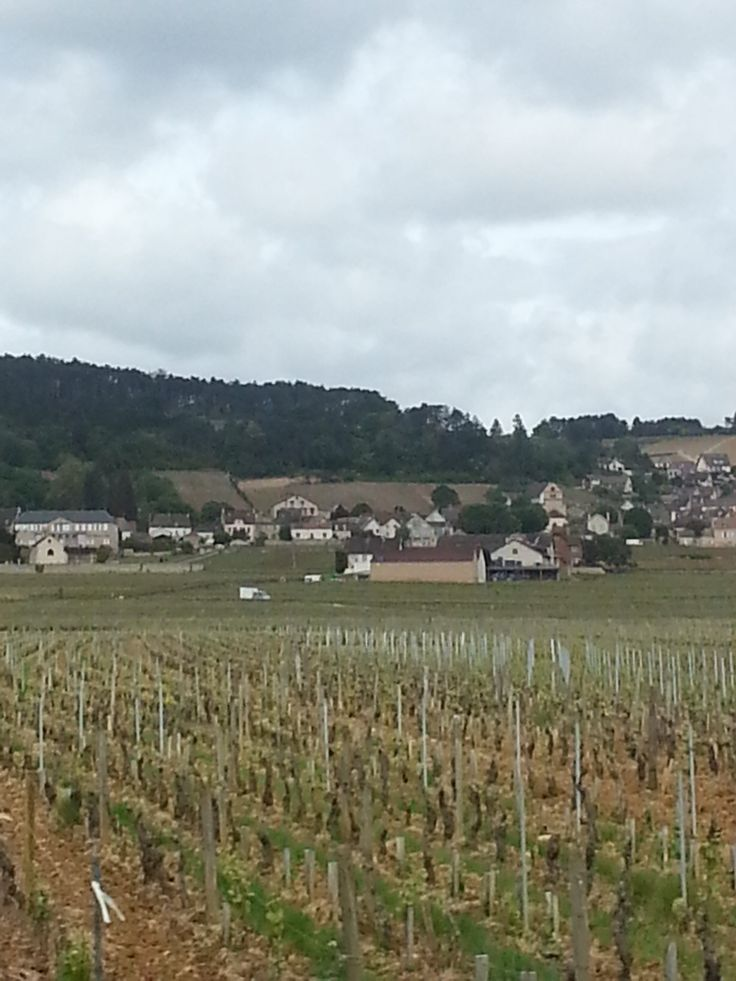 Vineyard and village, so french.