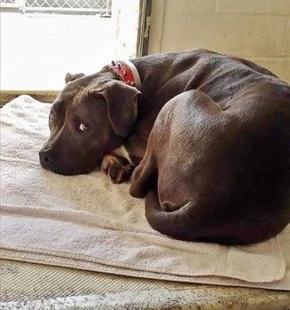 Lonely, loyal dog hopes and waits at shelter for family that will never return