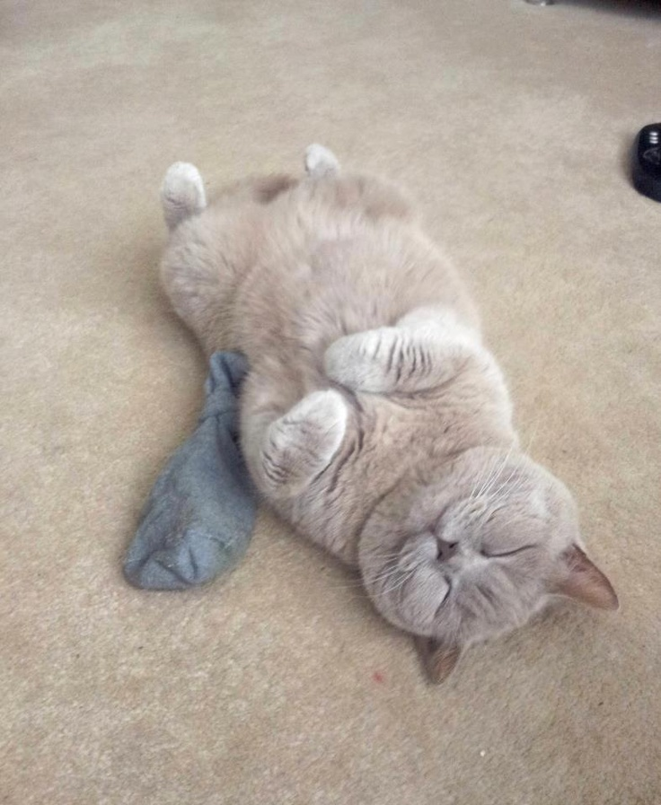 #cat sleep with favorite a pair sox..