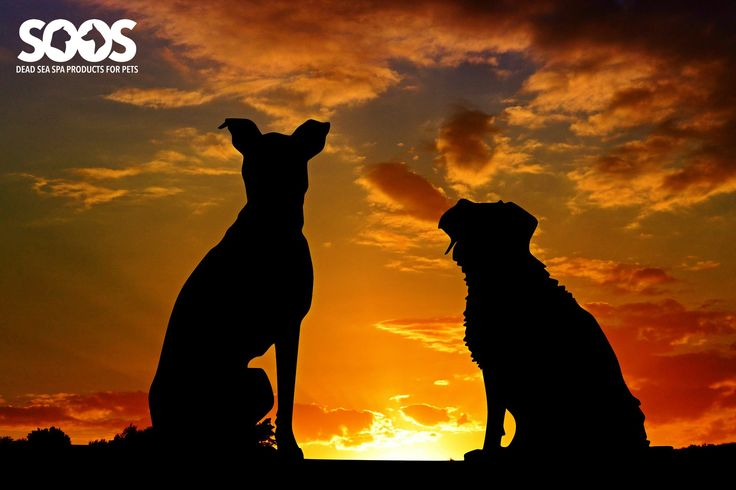"""A dog is the only thing on earth that loves you more than you love yourself."" – Josh Billings  #DogCareProducts"
