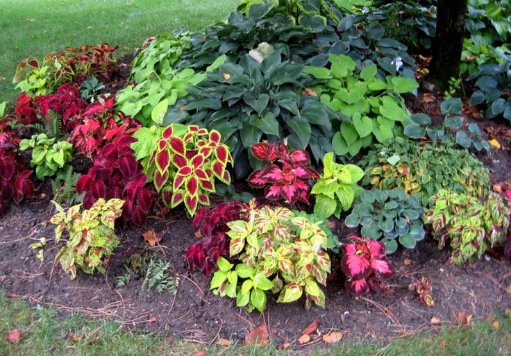 Annual shade plants