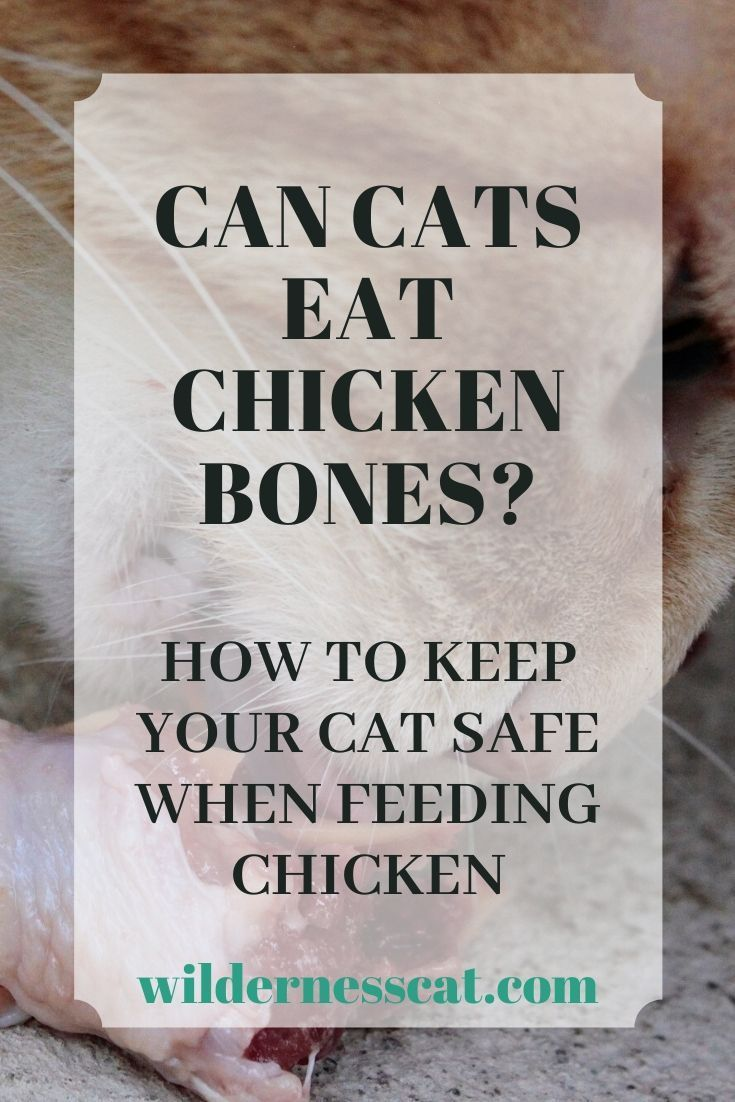 Can Cats Eat Chicken Bones A Complete Answer With Videos Wildernesscat In 2020 Chicken Bones Eating Raw Chicken Cat Food Brands