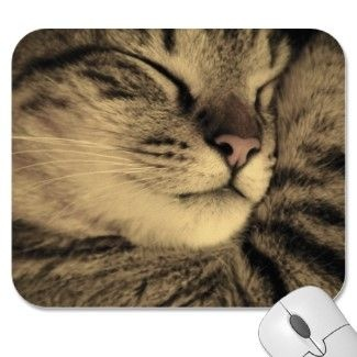 Zazzle Shop Showcase: Littlekittykeeper: Tabby Cats, Pets, Millie Cats, Kittens, Snuggly Tabby, Cat Mousepad, Cats Life, Kitten Approved