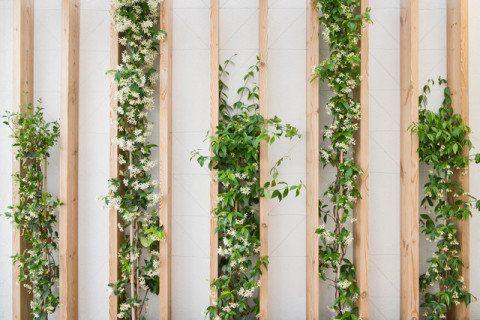 20 jardins verticais para todos os gostos