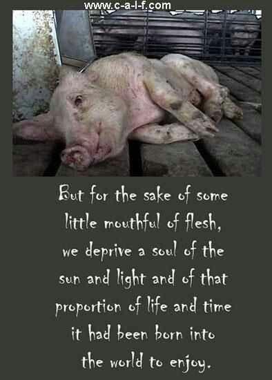 Can Raw Pork Hurt A Dog