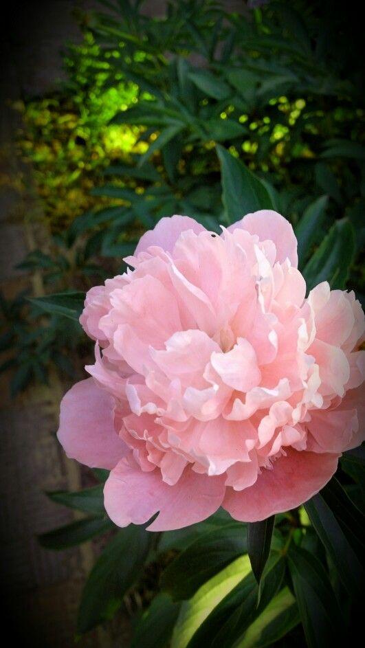 In garden :)