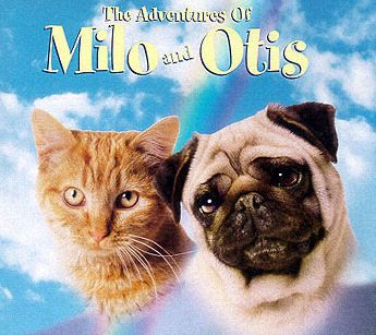 Milo And Otis Movie What Was The Cats Name
