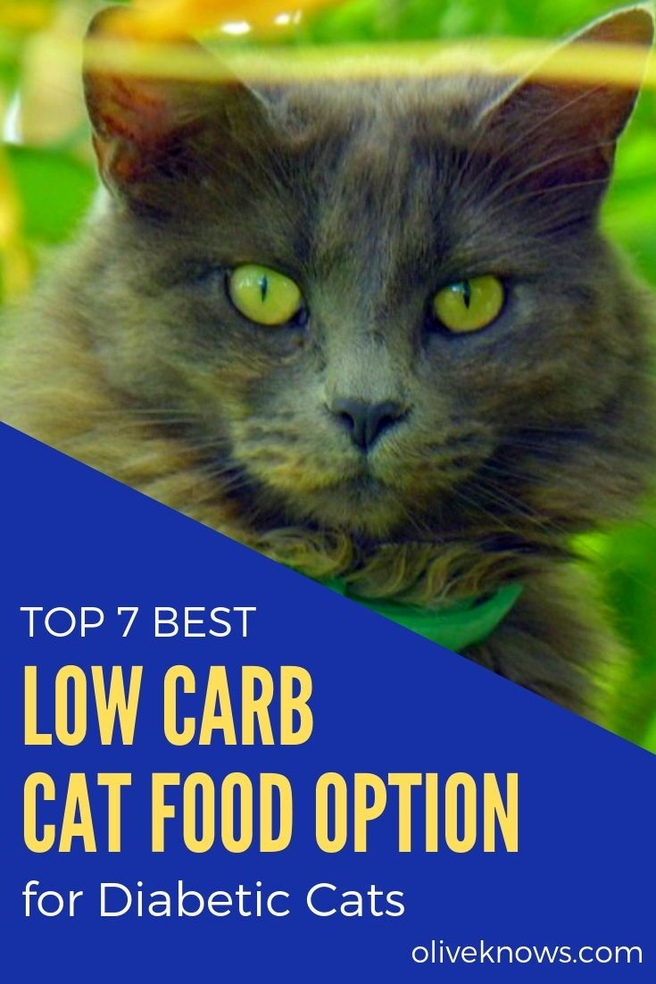 Top 7 Best Low Carb Cat Food Options For Diabetic Cats Oliveknows Cat Safety Cat Care Cat Food