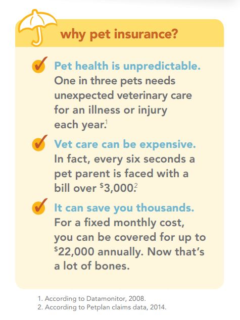Best Dog Health Insurance Nyc