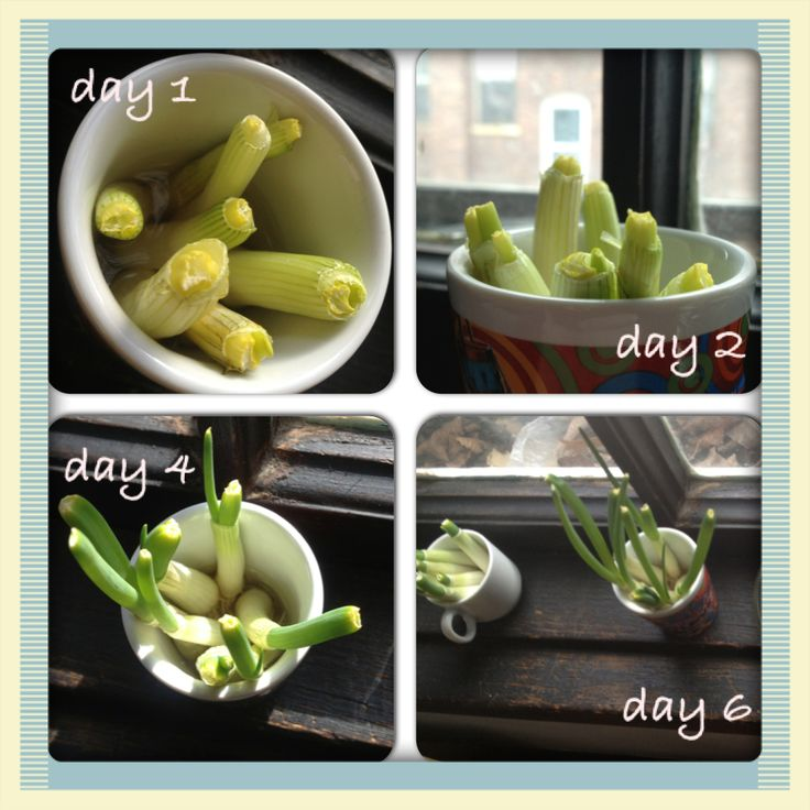 16 Foods That Will Re Grow From Kitchen Scraps: 1000+ Images About Regrow Vegetables On Pinterest