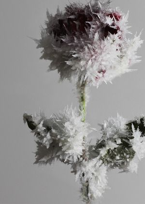 Art installation from Crystallized project by Tokujin YOSHIOKA, Japan