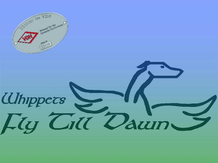 Whippet Breeders: FLY TILL DAWN WHIPPETS (really beautiful light brindle whippets)