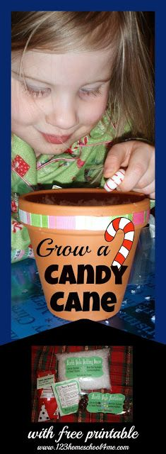 Grow a Candy Cane Christmas Activity for Kids with FREE Printable - this is such a clever Christmas activity for kids or gift kids can make. Perfect for preschool, kindergarten, first grade, 2nd grade class gifts, kids activities