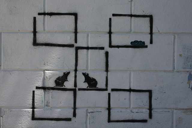 Rats in a maze by ithinkx, via Flickr