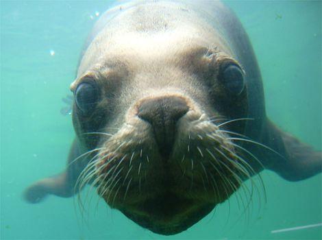 Seal rescue centre in Cornwall.