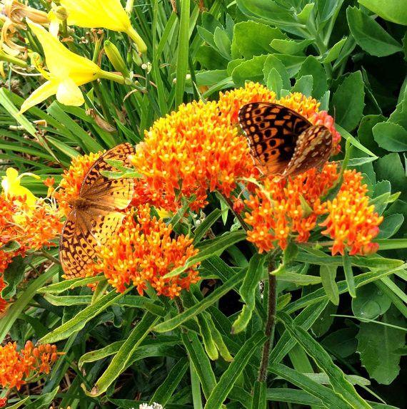 53 best native plants ohio images on pinterest native plants flower gardening and ohio