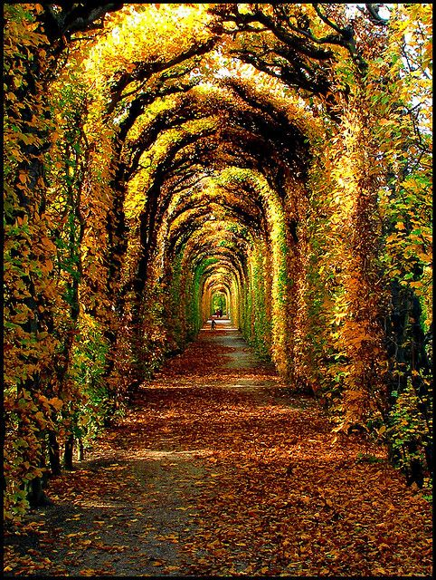 Autumn in Schönbrunn, Vienna, Austria - I've totally been here!  It was in the spring, and instead of golden, it was blossoming with purple flowers.