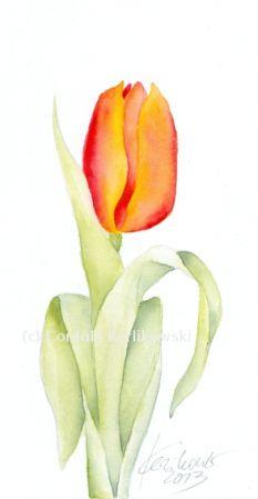 """Tulpe"" 12 x 24 cm, Aquarell, (c) Cordula Kerlikowski"
