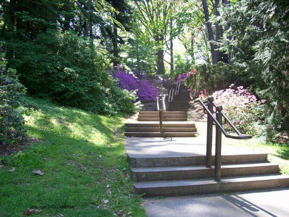 Highland Park Steps of Rochester, New York. Photo Taken by Carol Platt during Lilac Festival.  You can use the image in any personal use or a gift