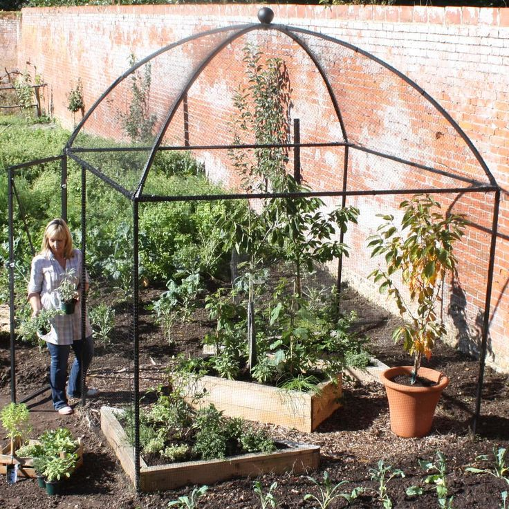 The Dome Roof Heavy Duty Steel Decorative Fruit Cage Is The Newcomer On The  Walk In Fruit Cage Block And Has Been Attracting Admiring Looks From The