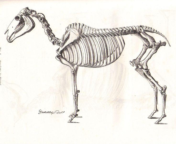 1000 id es sur le th me squelette humain sur pinterest - Dessiner un squelette ...